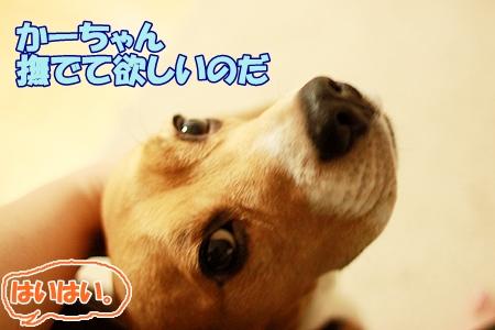 1_20110803231952.jpg