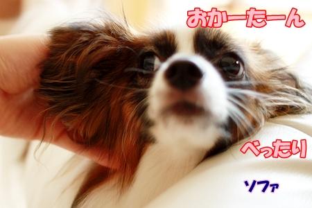 1_20110804220754.jpg