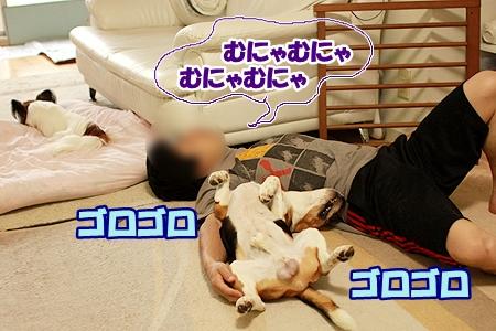 1_20110812111724.jpg