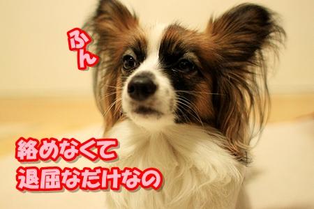 2_20110315215047.jpg