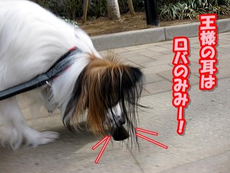 2_20110324211244.jpg