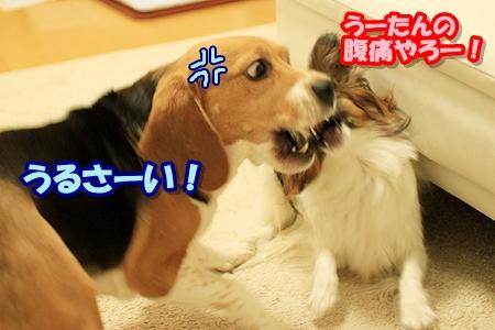 2_20110329002939.jpg
