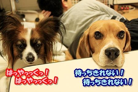 2_20110403212841.jpg