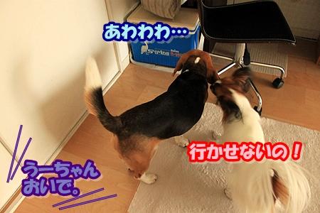 2_20110415235300.jpg