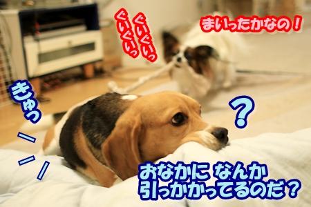 2_20110421204605.jpg