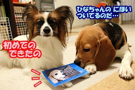 2_20110511231504.jpg