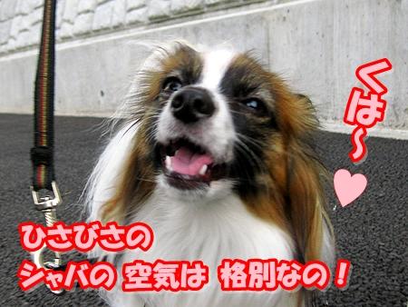 2_20110513210919.jpg