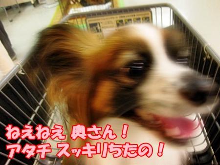 2_20110603201725.jpg