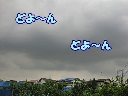 2_20110616211942.jpg