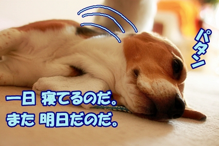 2_20110626170403.jpg