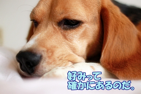 2_20110713011104.jpg