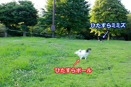2_20110718081250.jpg