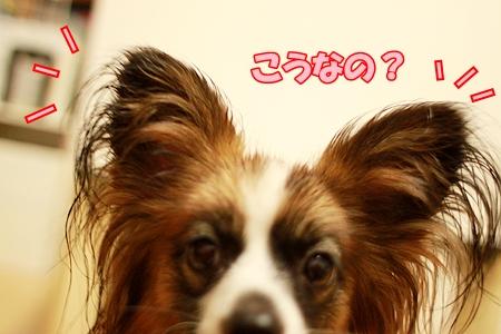 2_20110803002204.jpg