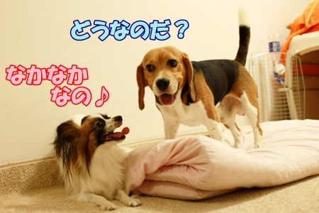 2_20110806205648.jpg