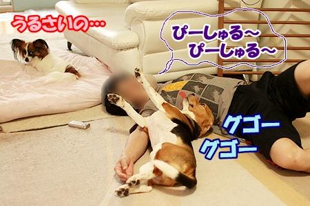2_20110812111724.jpg