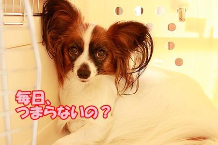2_20110823212312.jpg