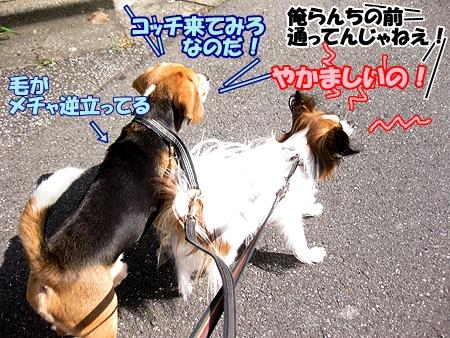 2_20111003105632.jpg