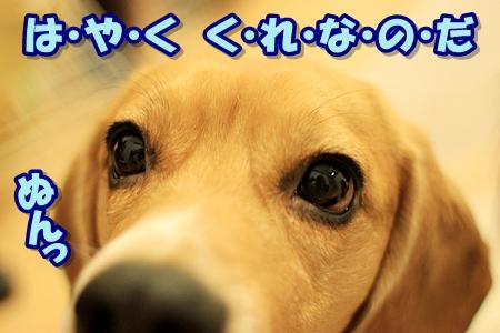 3_20110309220703.jpg