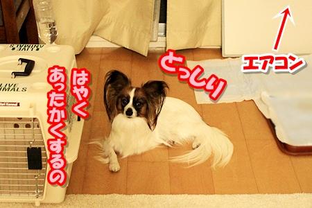 3_20110322234707.jpg