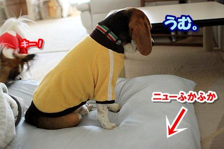 3_20110327205946.jpg