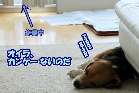 3_20110413204036.jpg