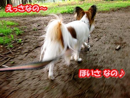 3_20110513210916.jpg