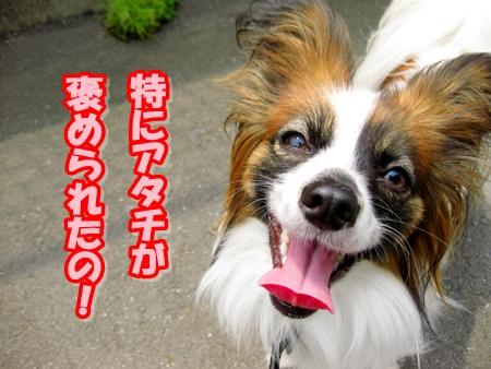 3_20110517215112.jpg