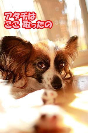 3_20110520221058.jpg