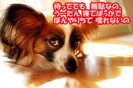 3_20110522112044.jpg