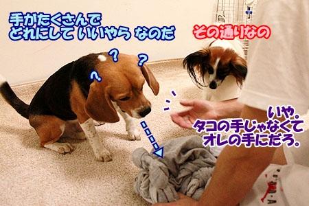 3_20110524233449.jpg