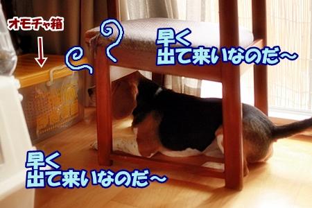 3_20110611205519.jpg