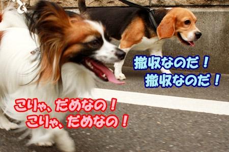 3_20110613002133.jpg