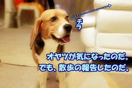 3_20110627104757.jpg