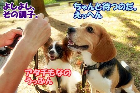 3_20110704150546.jpg