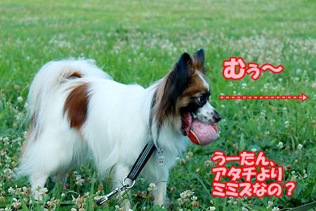 3_20110718081250.jpg