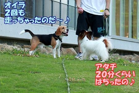 3_20110719081027.jpg