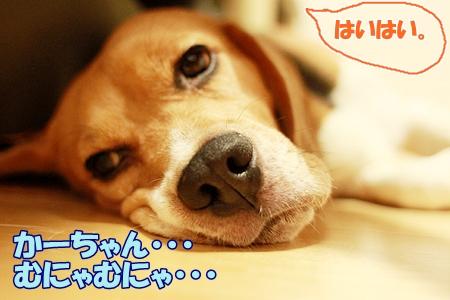 3_20110803231952.jpg