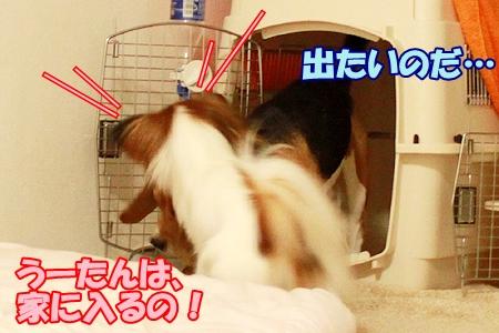 3_20110817231032.jpg