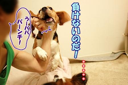 3_20110822223142.jpg