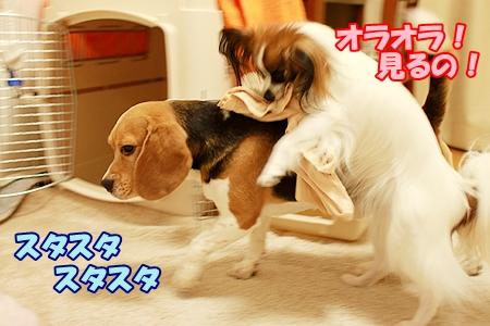 3_20110901000241.jpg