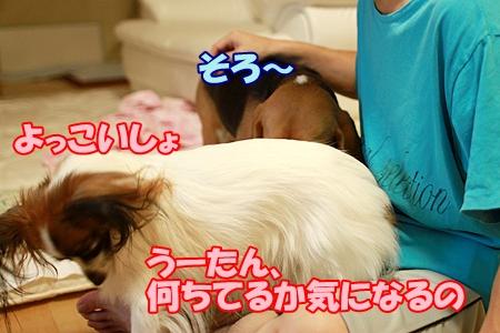 3_20110916223027.jpg