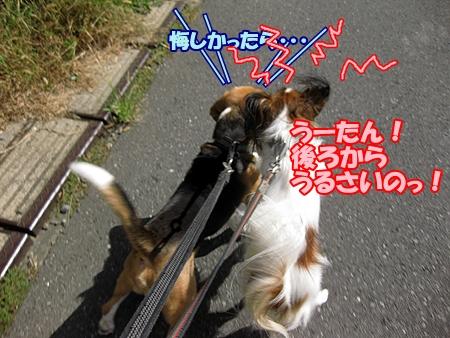 3_20111003105632.jpg