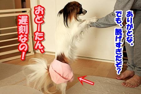 4_20110324211243.jpg