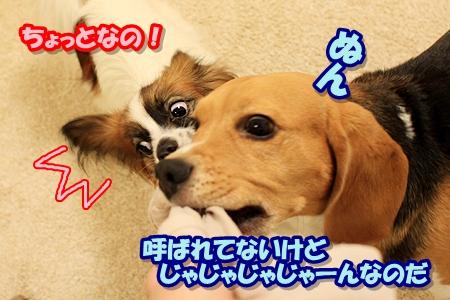 4_20110329002938.jpg