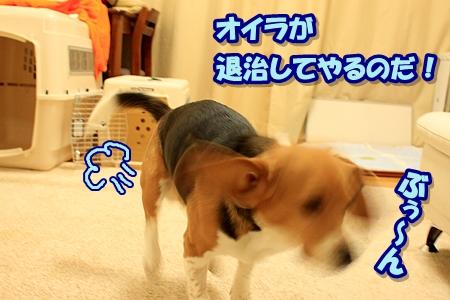 4_20110402111021.jpg