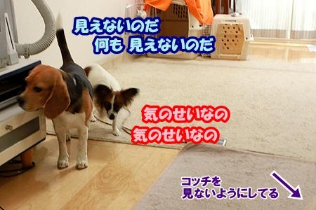 4_20110511231459.jpg