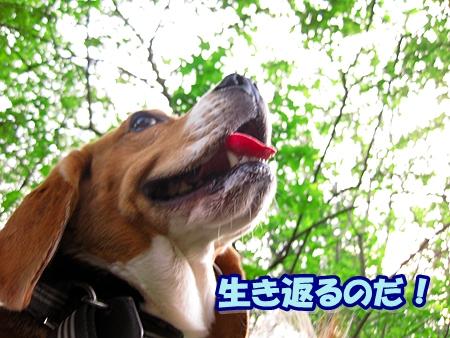 4_20110513210914.jpg