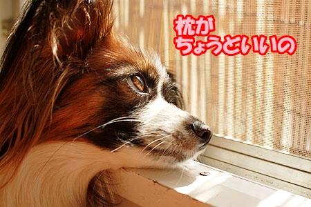 4_20110520221055.jpg
