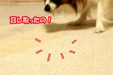 4_20110526232307.jpg