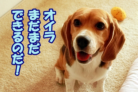 4_20110531215524.jpg